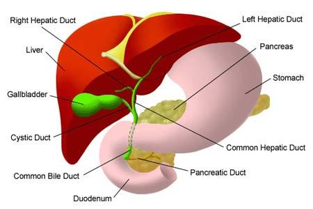 Liver Cancer types
