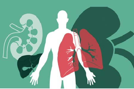 Organ Transplant in India